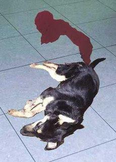 diarrea con sangre roja en perros