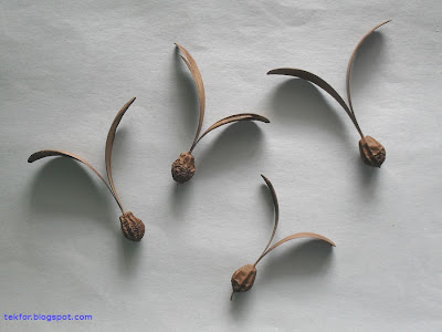The gyrocarpus seeds.