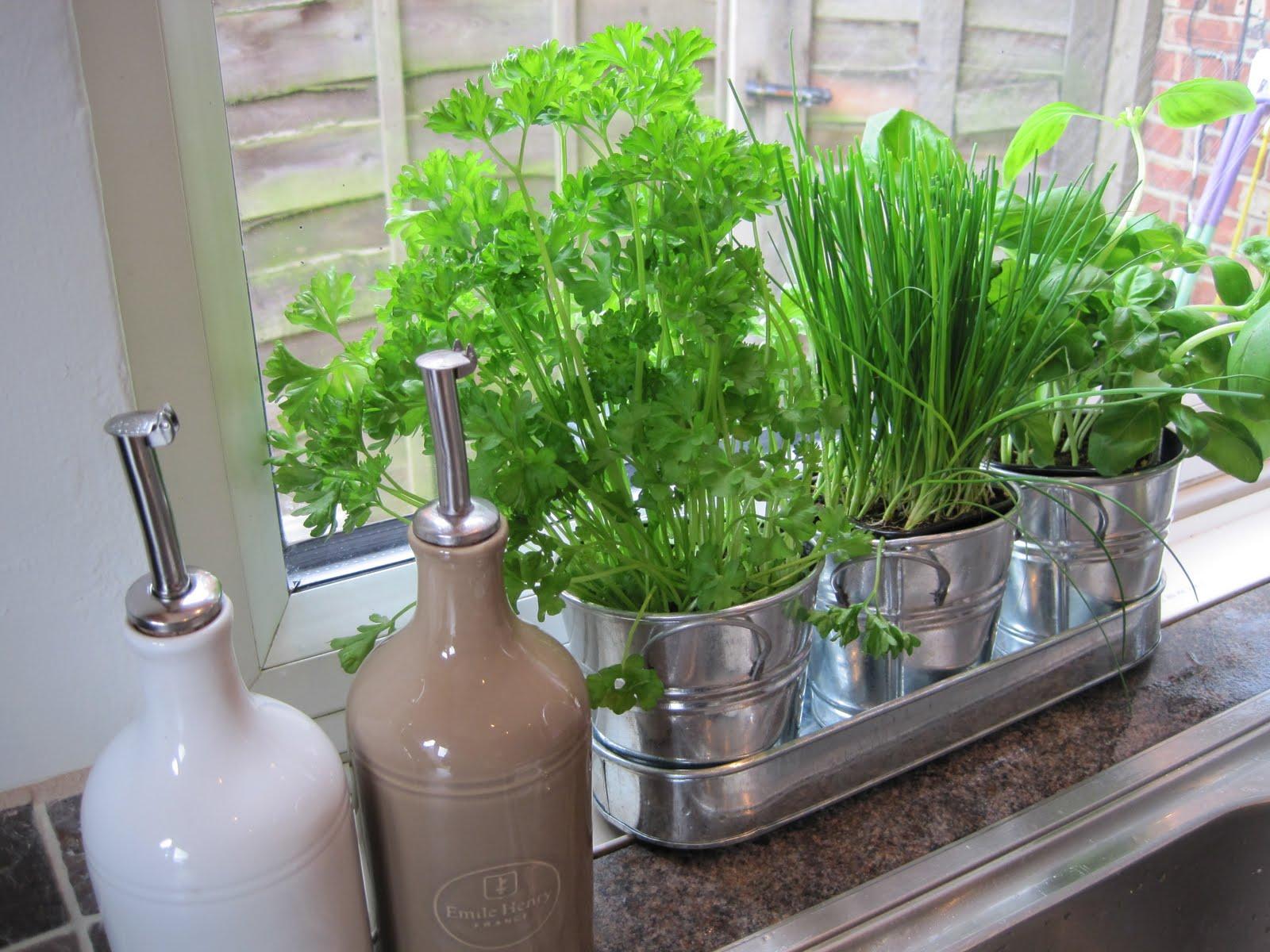 Free For All Friday Mason Jar Herb Garden Swoon Worthy