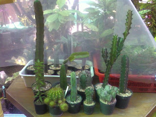 نبتة الصبار ( زراعتها - نبات الصبار والإكثار منه - بالصور) 1677-20071126211033.