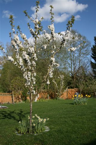 Flowers And Weeds Planting Decisions More Fruit Trees