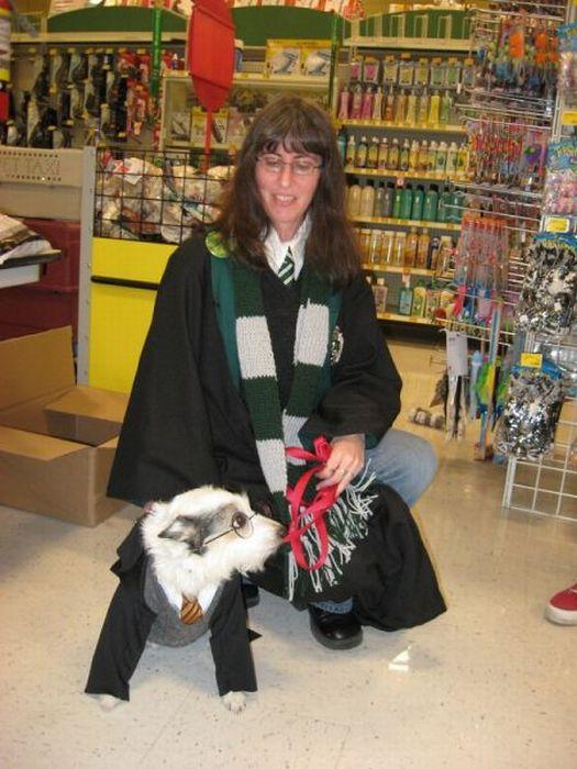 Harry Potter pets - 20 Pics   Funny