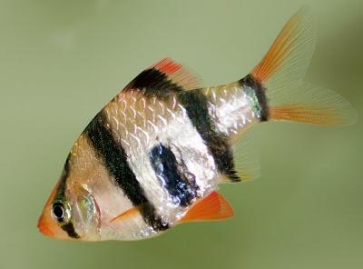 Fish   Exotic Tropical Ornamental Fish Photos With Names   Fish