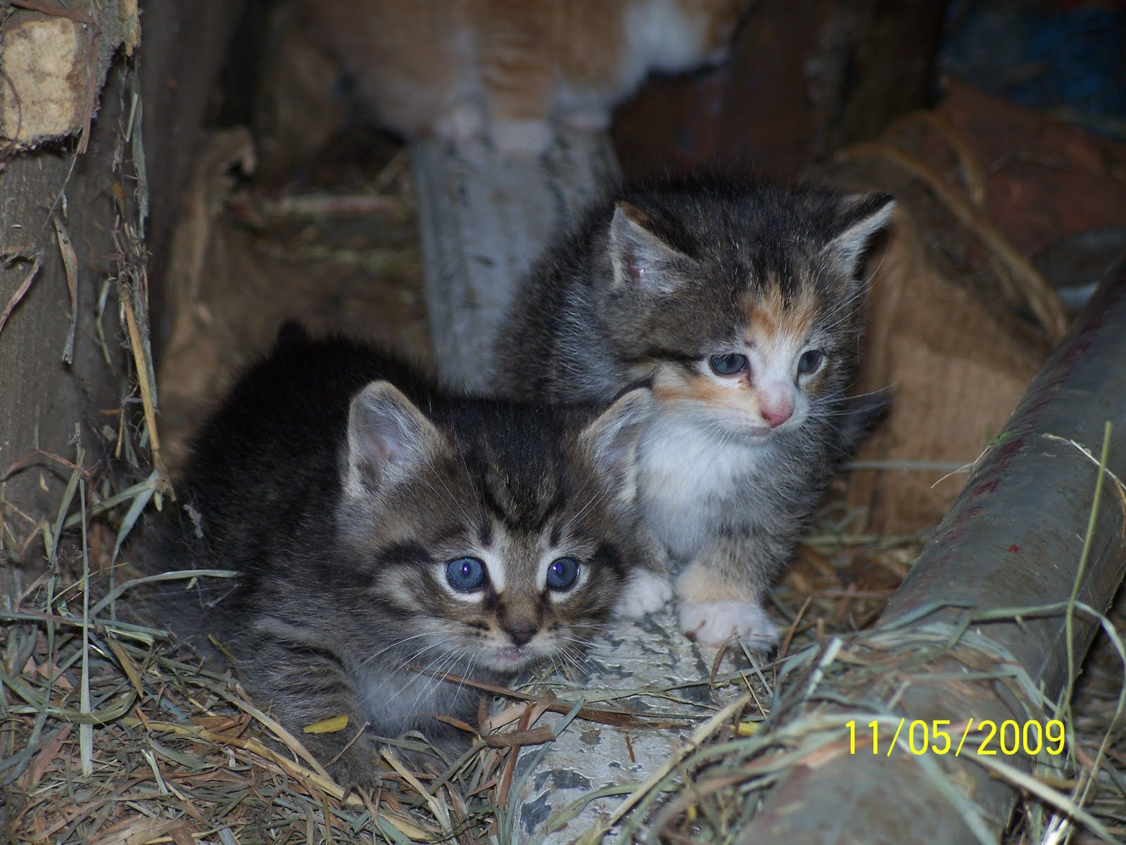 A Couple Of Farmers At Maple Lawn Farm Barn Kittens