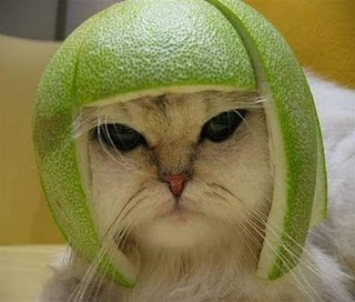 When Life Hands You Lemons...Make your kitty a helmet like this guy did with a lime!
