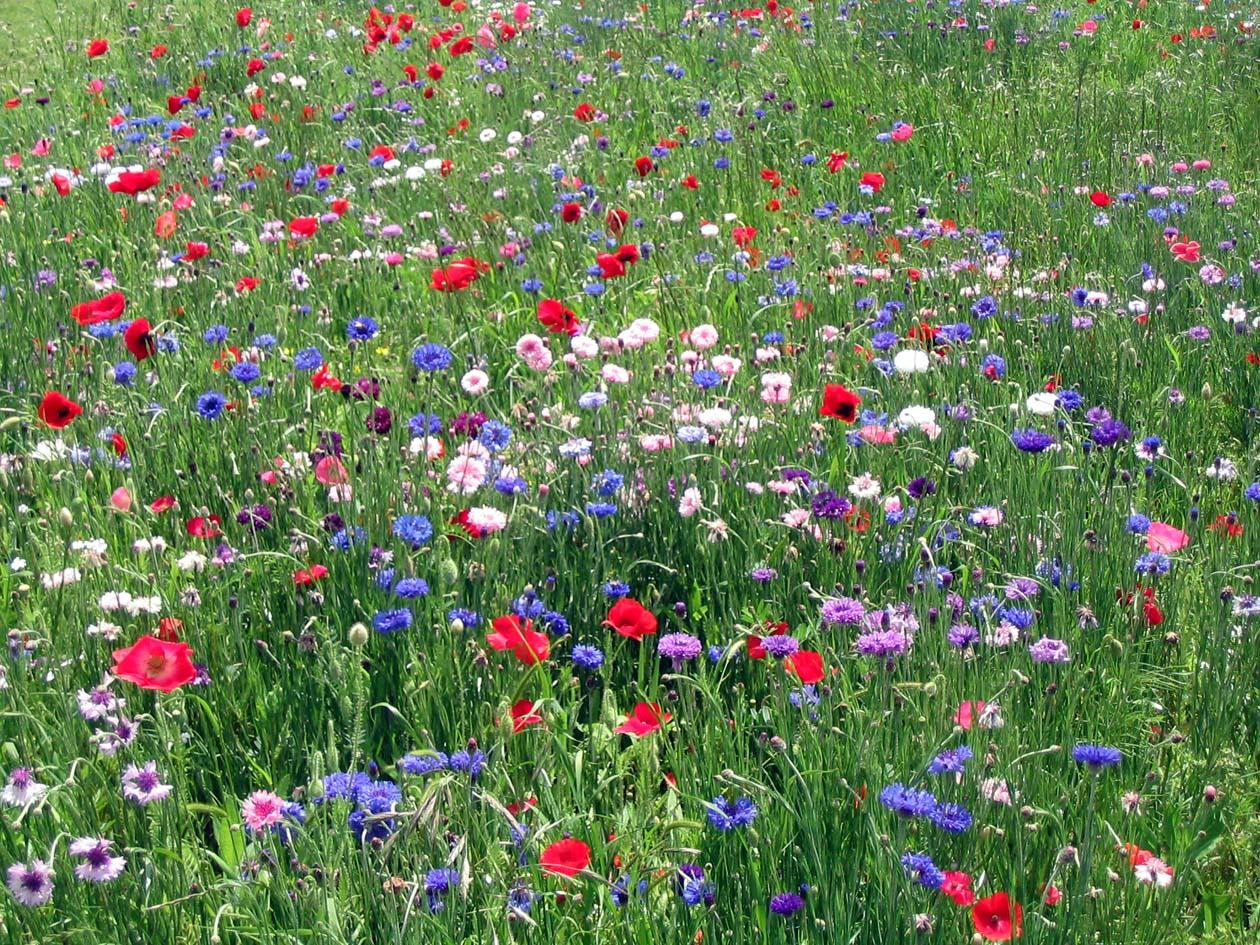 wildflowers%2B3.jpg