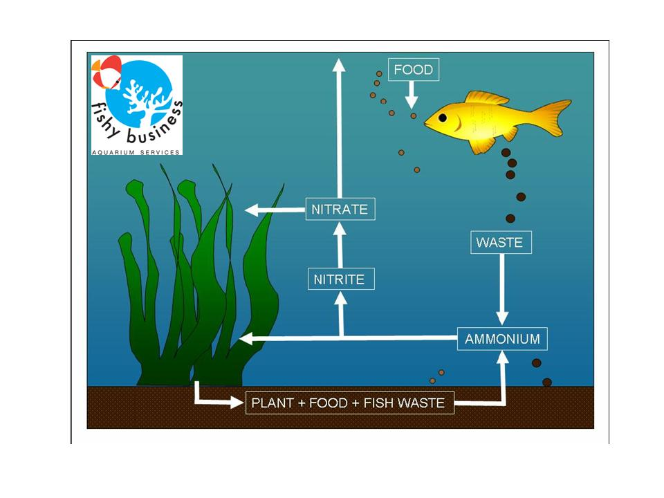 what causes high nitrate levels in aquariums