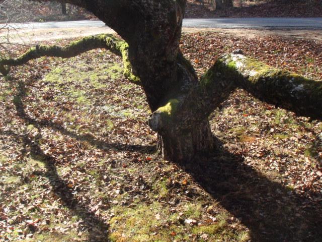 Bluedogantiques Moss Heaven