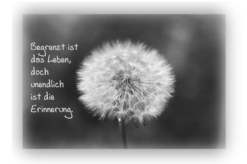 Fabelhaft Sprüche Zum Geburtstag An Verstorbene, Schne... | bellanorasatcy net @OU_24