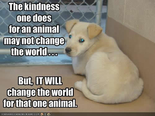 Kindness To Animals Quotes, Quotations & Sayings 2018