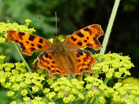 Picture of butterfly from an English Garden- Best British Blogs