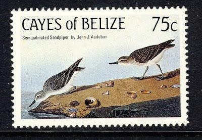 Taxonomy: Most abundant of all shorebirds passing through New Brunswick