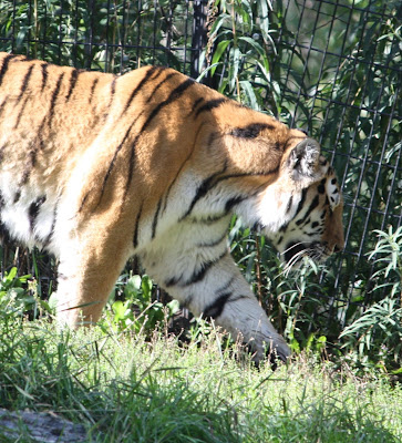 each day an adventure in alaska: a day at the alaska zoo