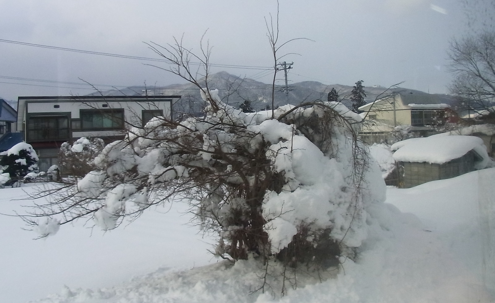 Japan Snow Country-7189