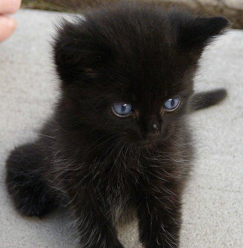 Black Kittens 21