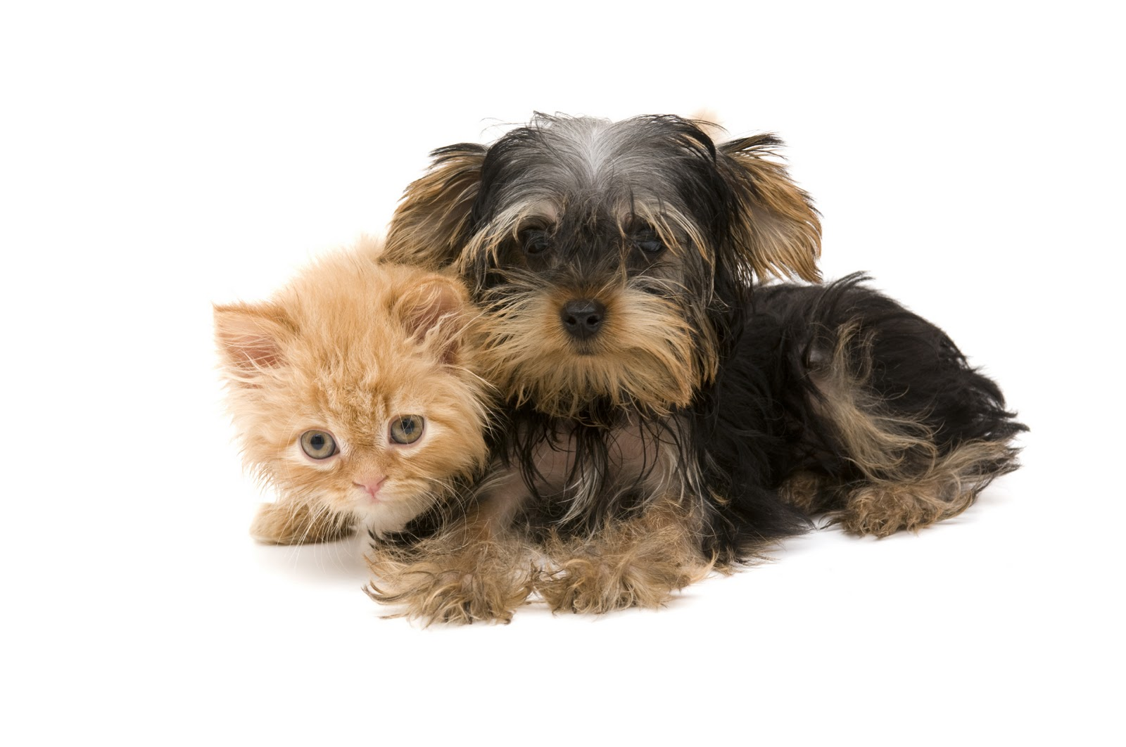 Cool Animals Pictures: Kittens and Puppies