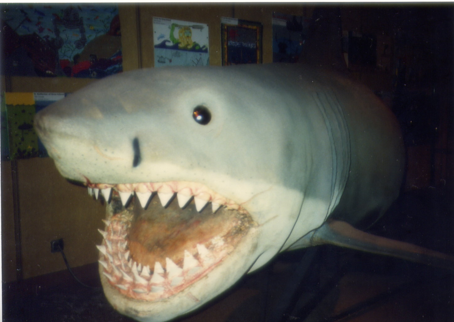 Jaws The Shark Toys 17