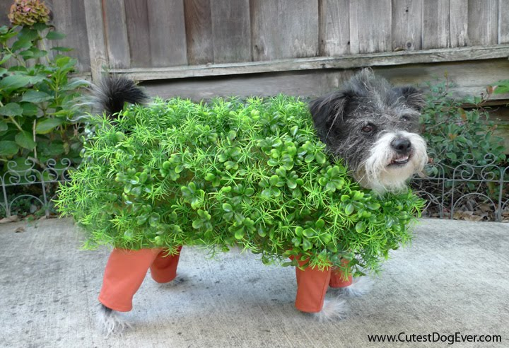 Chia Pet Dog Costume Gather some holiday garland and a plastic plant and attach them to an old doggie sweater, to make this cute costume for your little pupster. *love*.