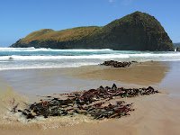 Kelp and Lion Rock, South Cape Bay - 28th January 2008