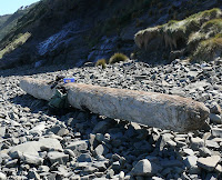 Log, South Cape Bay beach - 6 Oct 2007