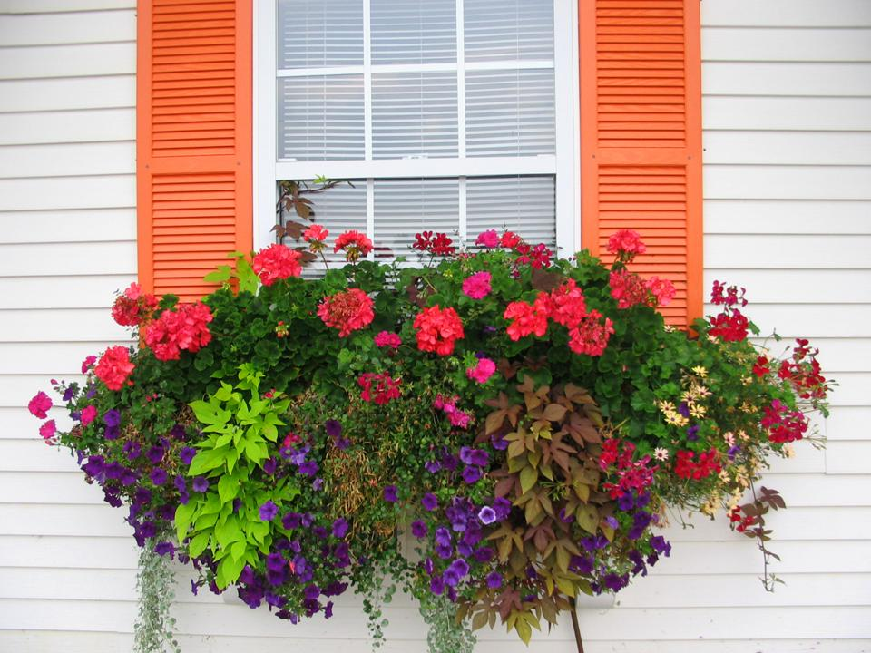 How To Plant A Rockin Window Box The Impatient Gardener