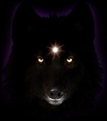 black wolf with green eyes - photo #31