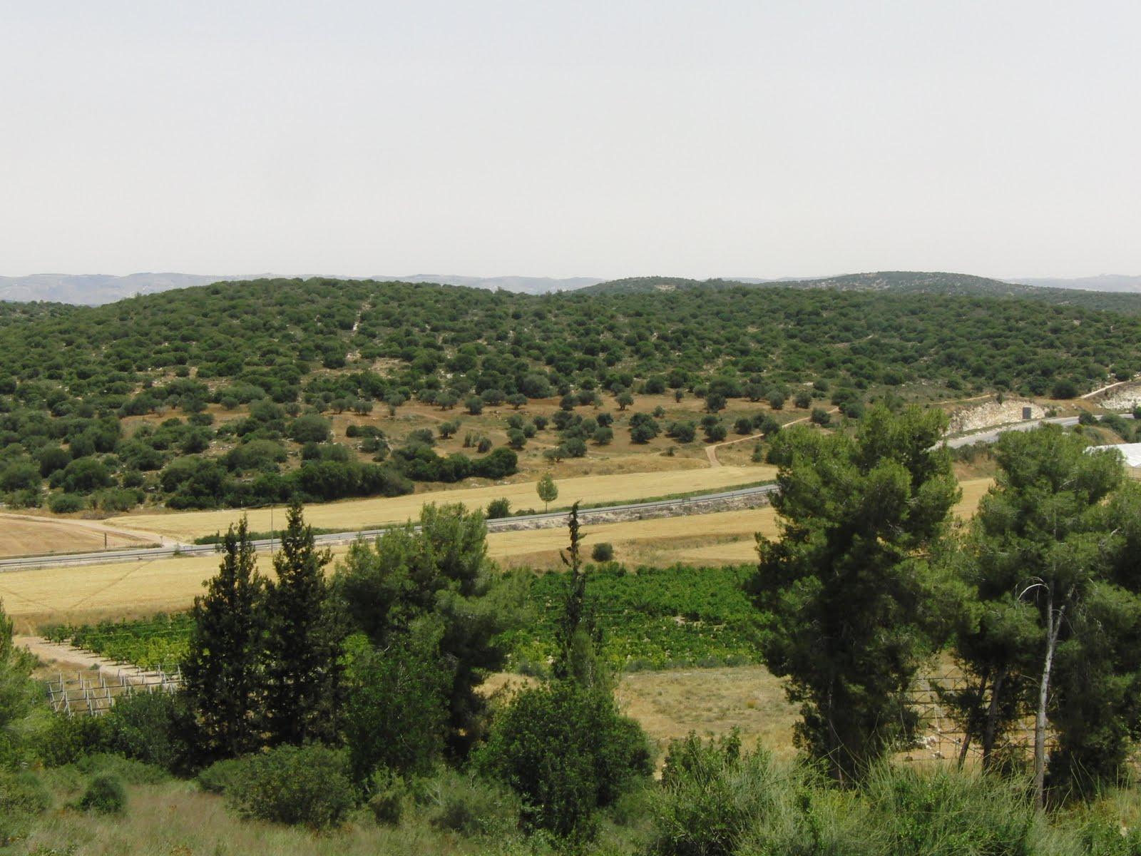 Stone Of Abel Beth Shemesh: Square Wheels: Jerusalem, David And Goliath, And The Ark
