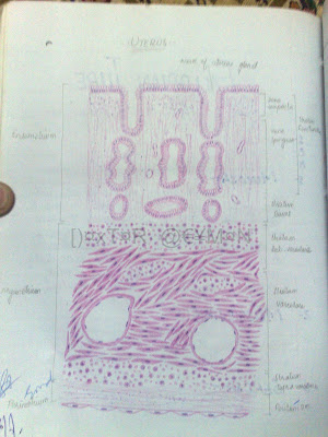 NIOSe Group of Education India: Histology Copy Diagrams