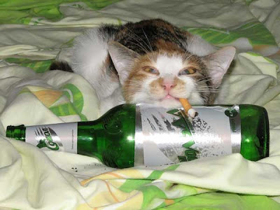 drunk cat pictures