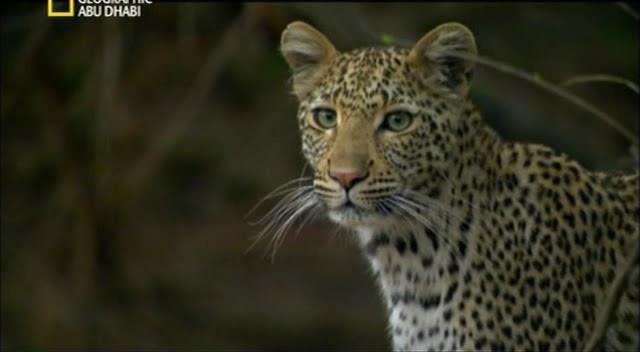 تحميل افلام وثائقية عن الحيوانات المفترسة