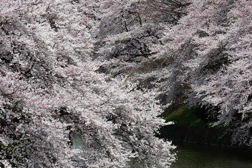 Visiter Okinawa Japon Fond Ecran De Cerisier En Fleur Et Du Japon