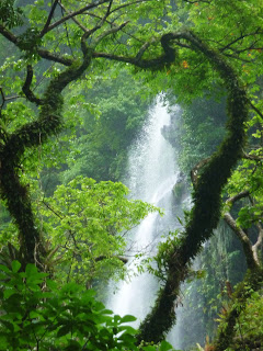 Lalaja Falls (Trinidad) - 2020 What to Know Before You Go ...  Trinidad And Tobago Maracas Falls