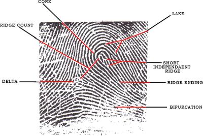 Tetra Blink 2 (2008-2009): Fingerprint 1