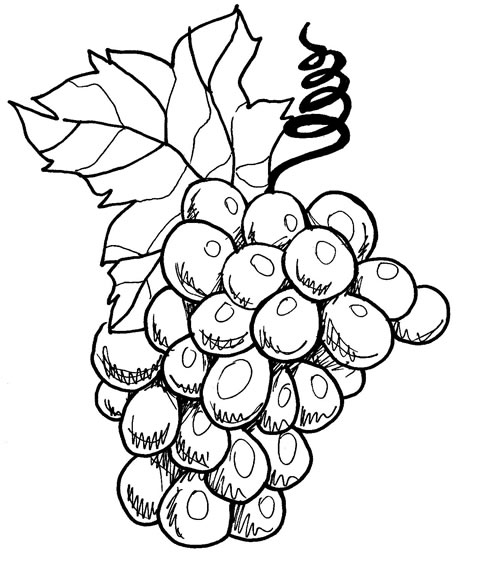 Desenhos De Frutas Para Colorir Uva Colorir Morango E Abacate
