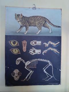 Kissan Anatomia