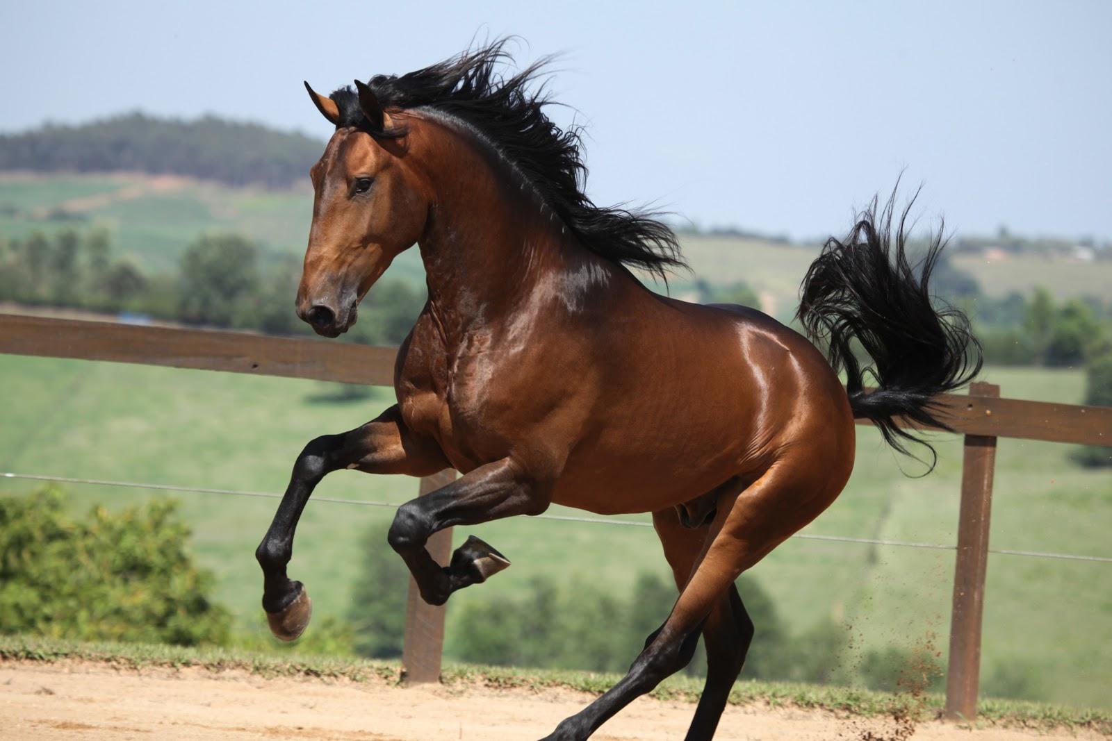 black a horse has - photo #37