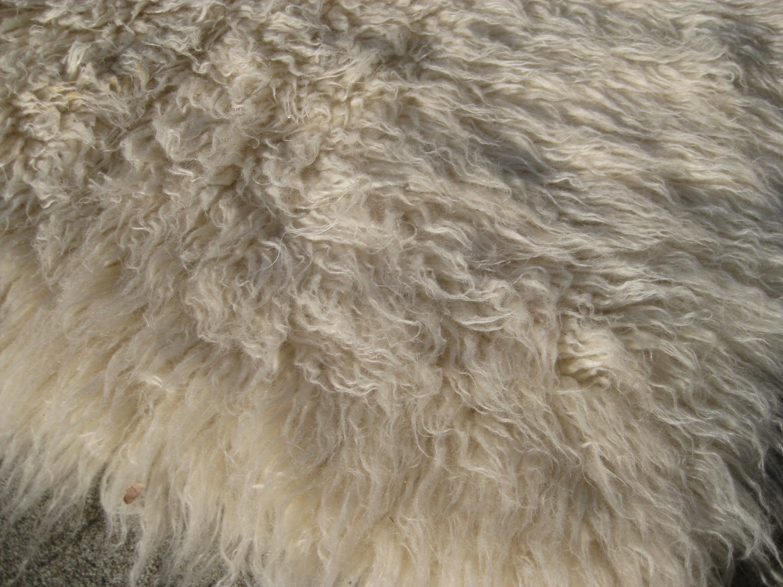 UHURU FURNITURE & COLLECTIBLES: SOLD - Fuzzy Rug (5' X 8 ...