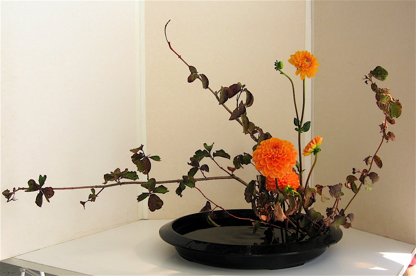 Asociación Cordobesa De Bonsái Ikebana La Flor Y La Vida