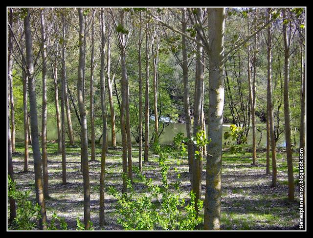 Entorno natural Monaterios de San Pedro de Arlanza
