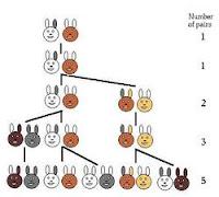 fibonacci, conigli