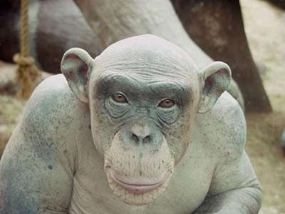 The Most Ugliest Animals Bald Lvldoom Lyrics