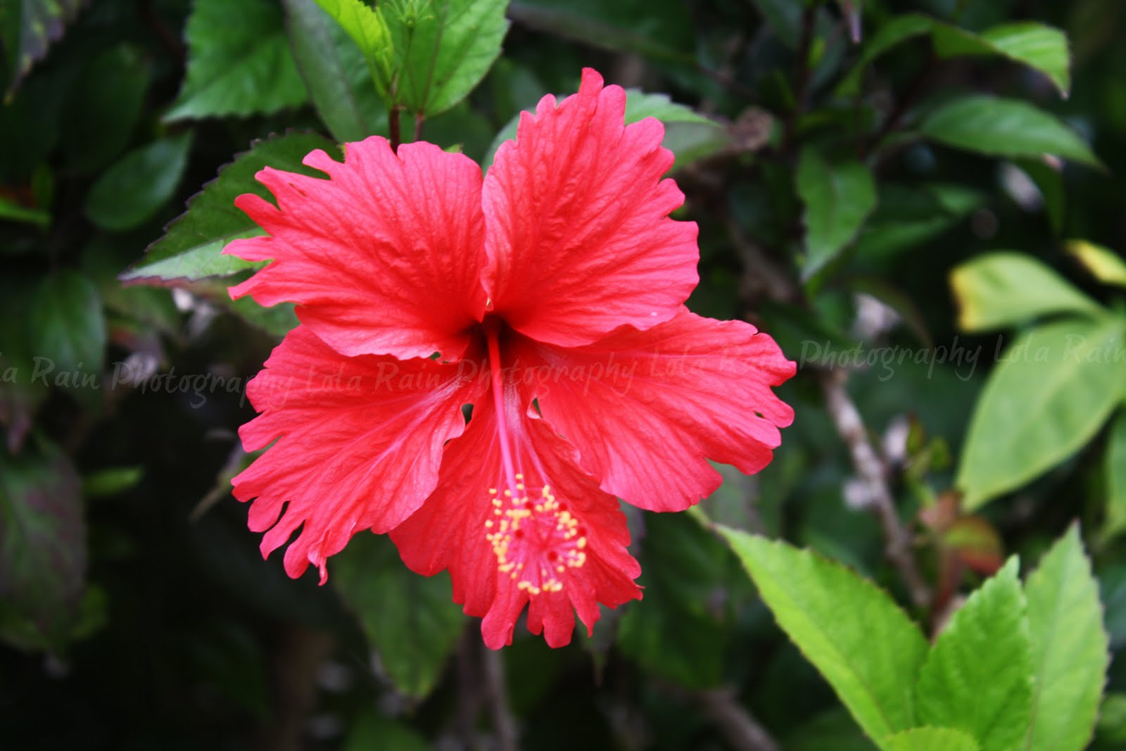 Lola's Child: tropical flowers