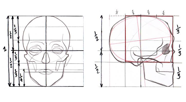 Cuaderno del Profe: Las proporciones en el rostro