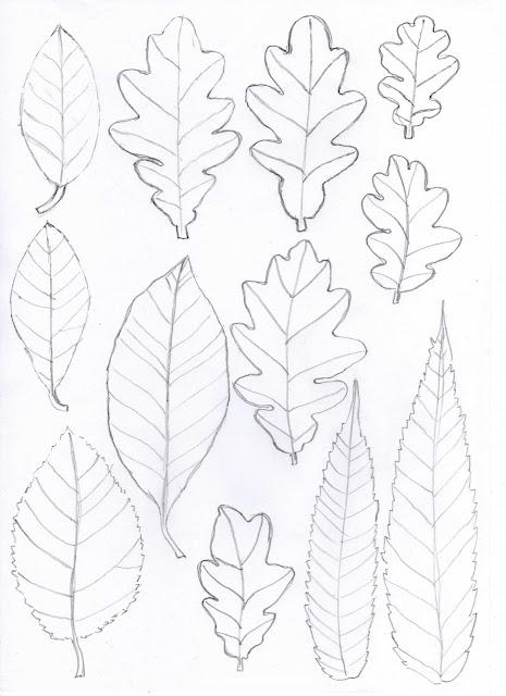 [oak+leaves001.jpg]
