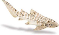 zebra shark toy miniature