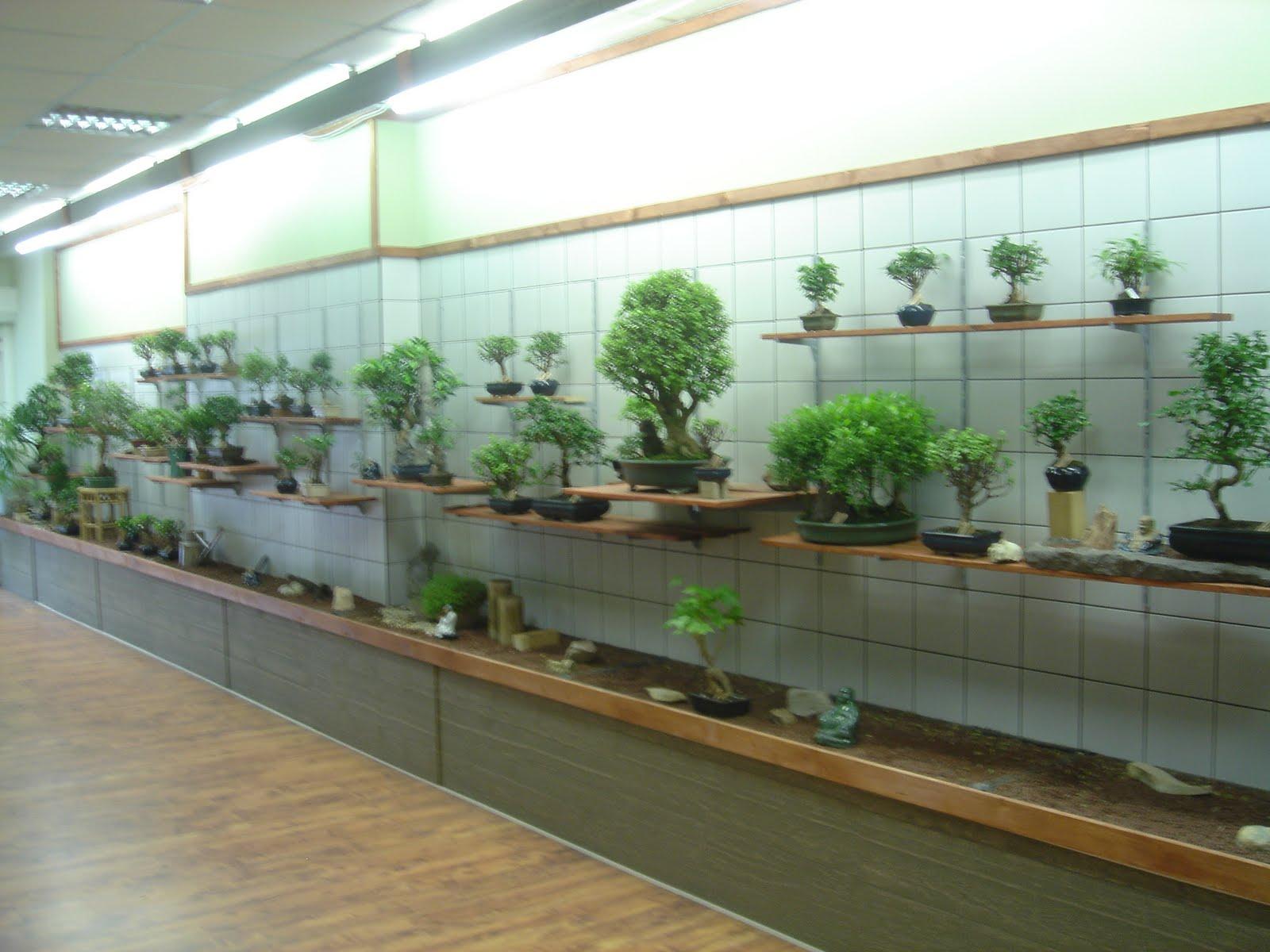 bonsai shop berlin bonsai blog yoske nishiumi bonsai concept berlin bohnenhase bento j store. Black Bedroom Furniture Sets. Home Design Ideas