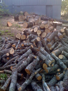 Firewood out back