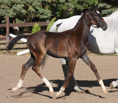 The Perfect Horse: How to make money breeding horses