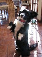 very cute small black dog