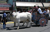 Boyero in Ciudad Colon